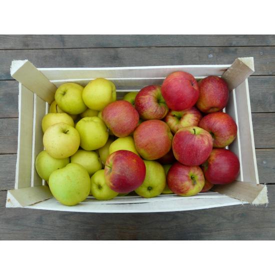10 kg édes alma
