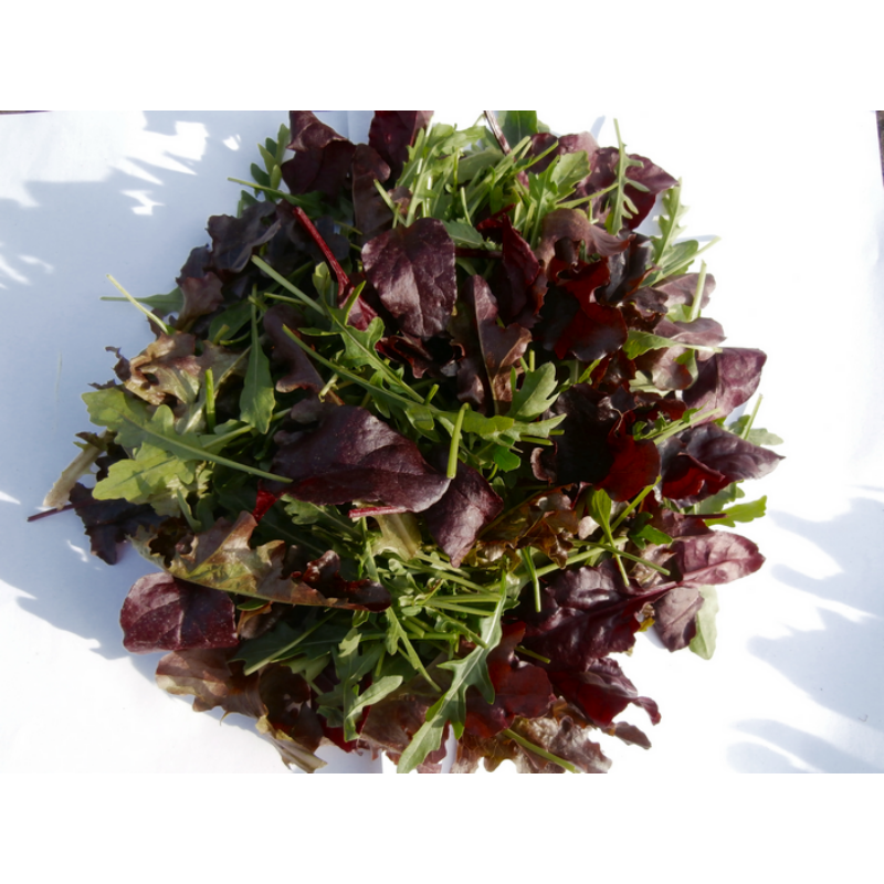 Saláta mix (10 dkg)